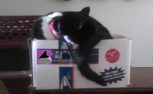cat sleeping on a box