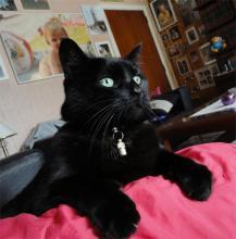 Mika's picture