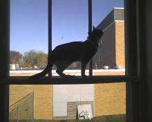 silhouette of a cat in front of a building