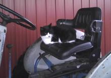 Smudge cat on tractor