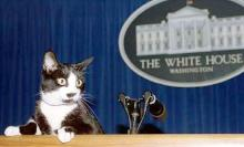 Socks at the podium, Clinton White House