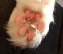 teddy bear toes!