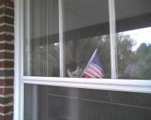 cat looking out window with flag reflection