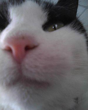 selfie337.jpg
