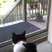 watching the neighbor cat