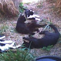 4catsinhay-cropped-200.jpg