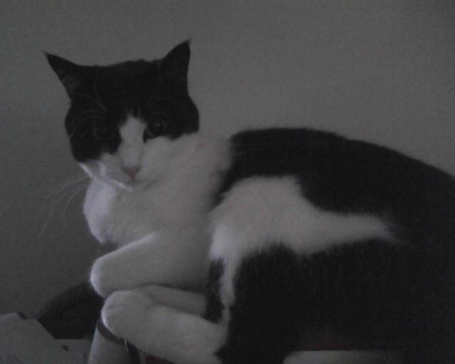 Parker Prettycat on her 4th Birthday