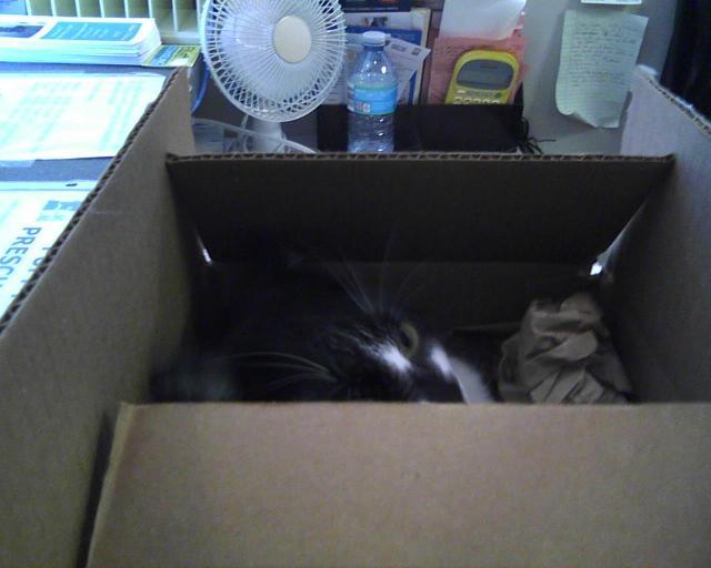 cat hiding in box