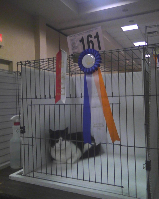 cat 161 with ribbon of merit and 3rd place