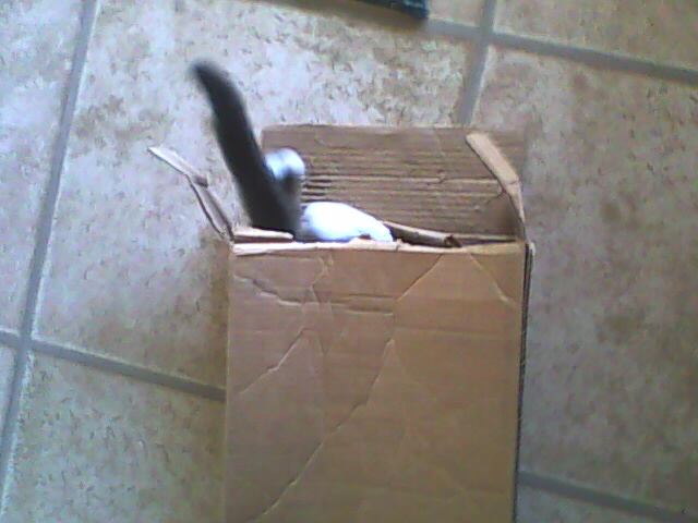 Kitty in a box