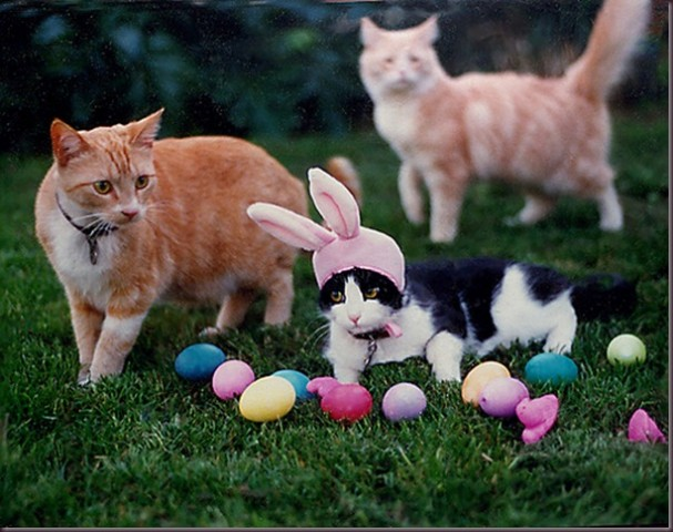 HAPPY EASTER | Aimable Cats