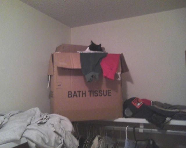 cat sleeping in box of clothes