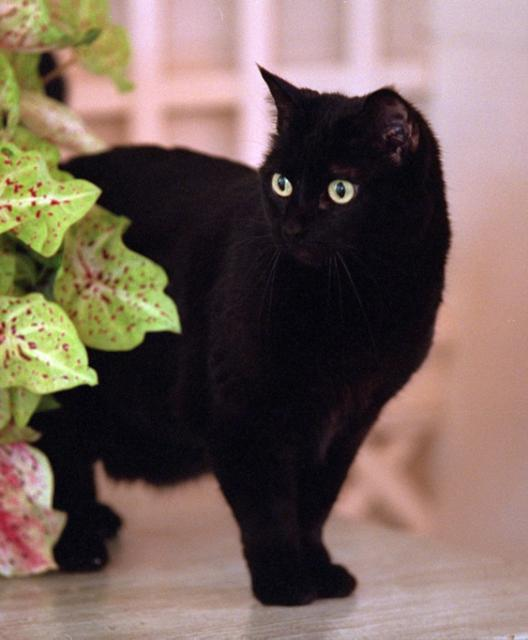 Indio, cat of G.W.Bush
