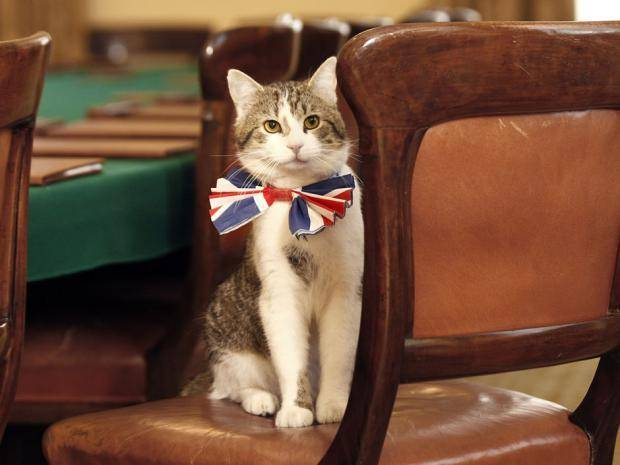 Larry the Downing Street Cat with a UK Union Jack bow tie