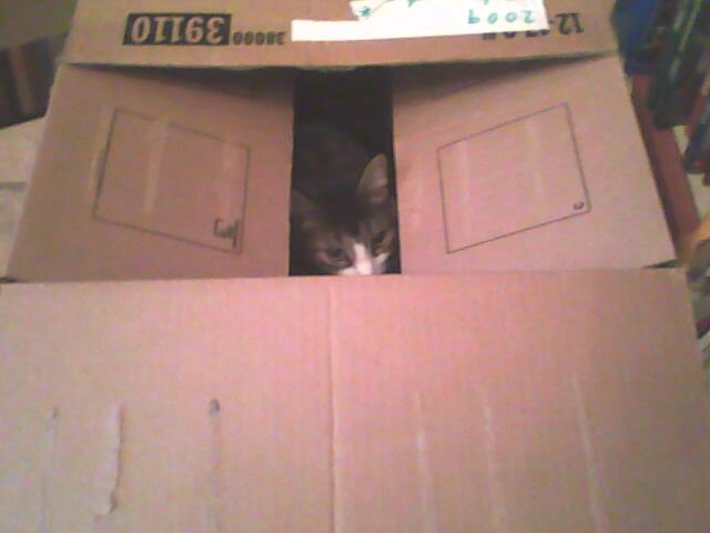 Midge hiding in a box