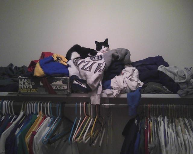cat on closet shelf
