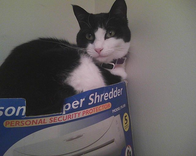 personal paper shredder