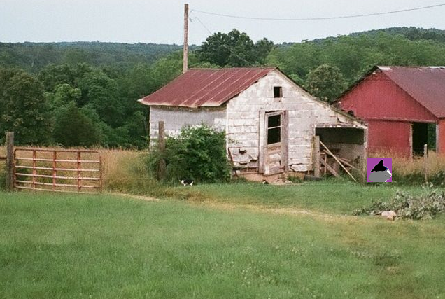 cat shed