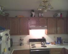 cat on kitchen cubbards