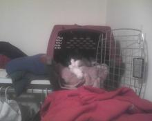 cat sitting in carrier
