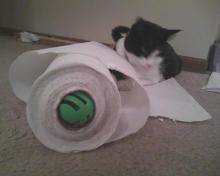 cat playing with ball and paper towels