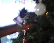 #OccupyTree cat Christmas tree 1