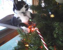 #OccupyTree cat Christmas tree 2