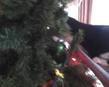 #OccupyTree cat Christmas tree 3