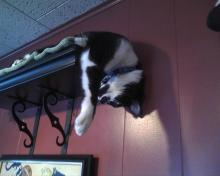 cat on a shelf with head hanging down