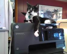 cat on a printer