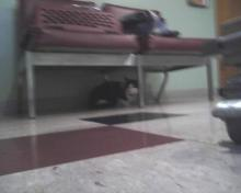 tuxie cat under couch