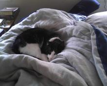cat on comforter on bed