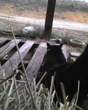 black cat looking away on farm