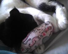 cat with catnip toy