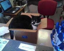 tuxedo cat sitting in box