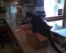 cat on box