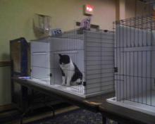 Parker in cat show ring 7 again