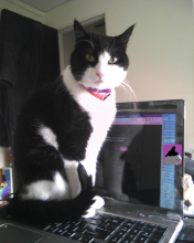 Parker Prettycat sitting on laptop