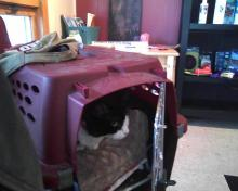 Parker sitting in carrier in waiting room
