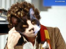 Tuxedo cat as 4th doctor