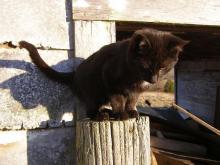 Axel black cat on post