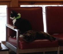 tuxedo cat and tortoiseshell cat sitting together
