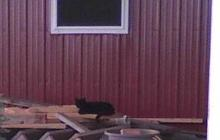 lone black kitty