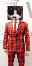 cat in ugly plaid suit and tie