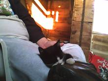 kitten sleeping on lap with kitty litter in background