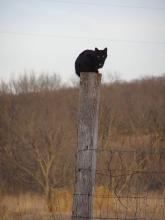 Black cat on a post