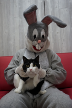 cat sitting on Easter Bunny's lap