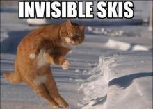 cat with invisible skis