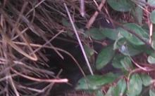 another kitten in bushes