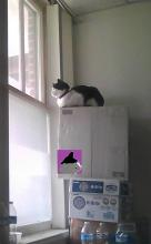 cat on a tower of boxes